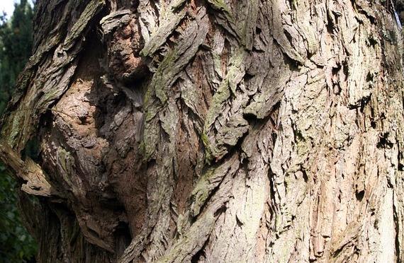 tree2A.jpg